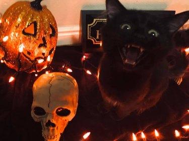 black cat sits next to halloween decorations