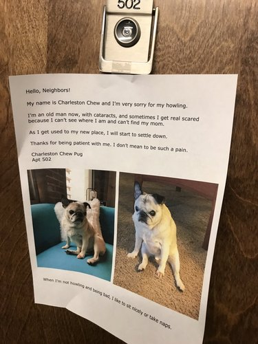 pug apologies to neighbors for barking in apartment