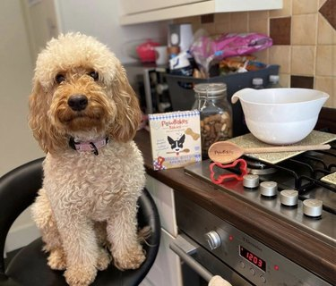 dog sitting by stove