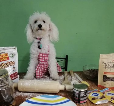 dog with rolling pin