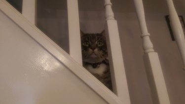 Gloomy cat siting on staircase