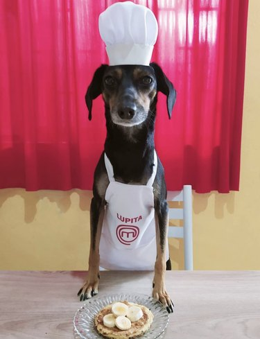 dog in chef's hat