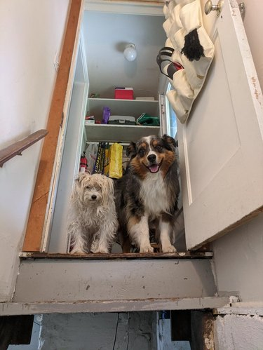 Two dogs standing at the top of basement stairs