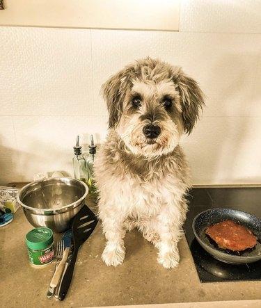 dog making pancakes