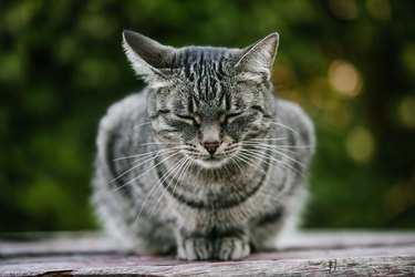 A sad street cat sitting with closed eyes on a wooden bench against a background of green plants.