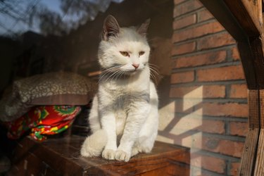 White cat in the old house