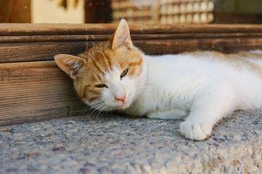 Cat on window sill wooden window