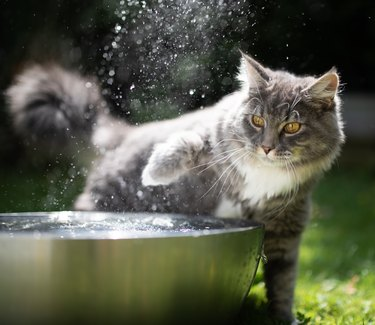 cat water play