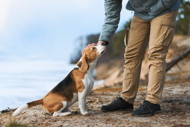 Man petting his dog friend