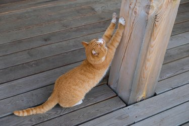 A stray stray cat is sitting on a wooden pier, waiting for the owner, sharpening its claws on a wooden pole. Adoption of pets.