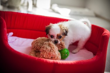 puppy in red dog bed with toys