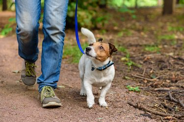 Concept of healthy lifestyle with dog and man hiking outdoor