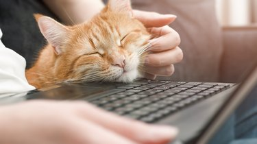 cute ginger cat at a laptop close-up