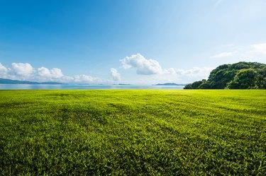 Outdoor grassland