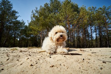 cute little dog is playing on the sand in the forest