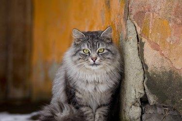 Portrait of cat sitting on wall,Shchyolkovo,Russia