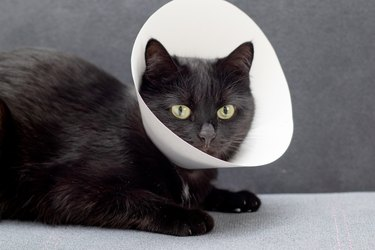 Black cat wearing Elizabethan collar lying on a gray sofa after surgical operation. Animal healthcare concept