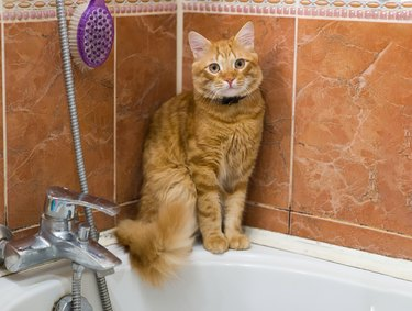 The ginger cat is sitting in the bathroom.
