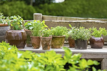 Home garden with herbs for personal use.