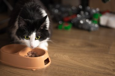 cat eats food from a bowl on the background of a blurred Christmas tree with Christmas gifts