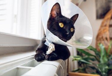Small black cat with funnel cone collar