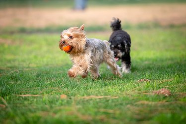 Fetch at the Dog Park