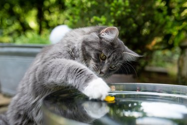 cat in garden playing with water fountain