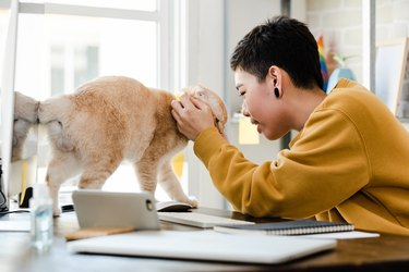 Young Asian tomboy woman in casual attire touching her cat affectionately during work from home in living room