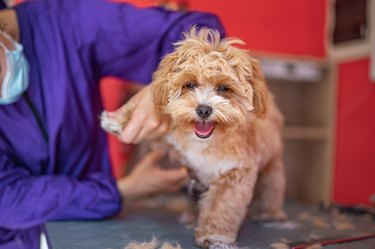Cute puppy at a dog groomer