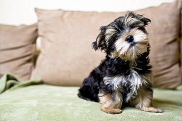 Little Curious Puppy