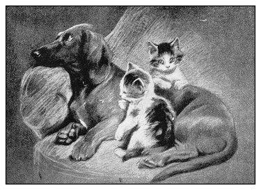 Antique illustration: Dog and kittens