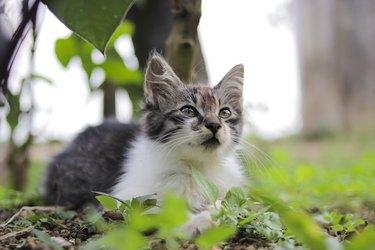 Cute kitten playing in the yard. Kitten stock photo