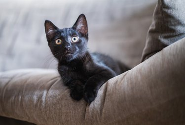a little kitty with yellow eyes lies on a couch and looks into the camera.