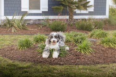 Dog in yard poses for the camera