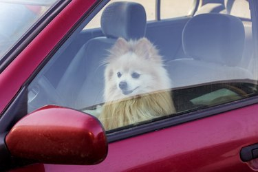The dog is closed in the car