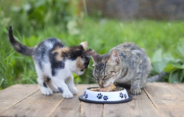 Mother cat and kitten eating food from cat bowls outside