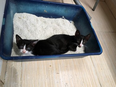 two kittens in a litter box