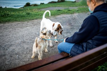Meeting two dogs for a walk