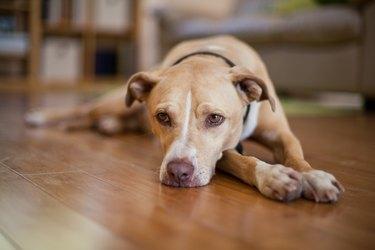 Senior, mixed breed dog