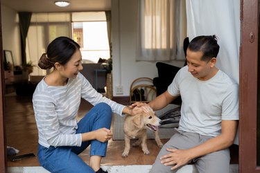 Young adult couple holding a puppy with home interior in background. 30s mature woman holding a dog pet talking with a man. Husband and wife living together at house. Family happiness concept