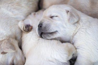 Newborn puppies at their box