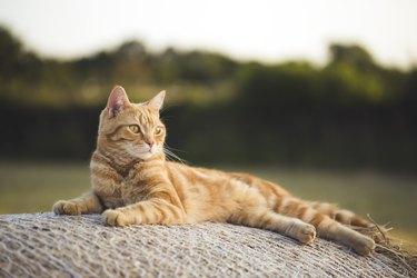 Relaxing evening cat