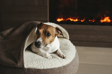 The dog is lying next to the fireplace.
