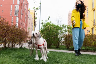 beautiful woman in medical mask walking with chinese crested dog in park