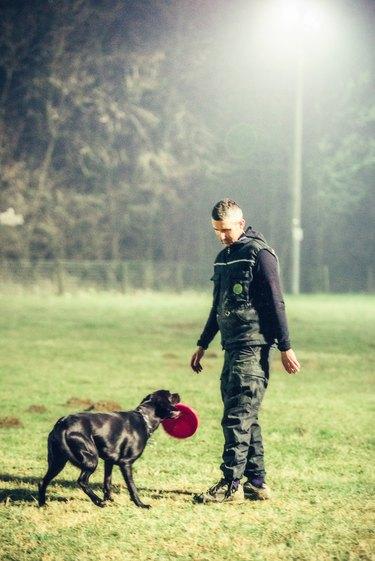 training process in dog school