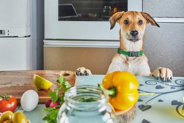 The dog looks with interest at the table with food prepared for a virtual online master class, prepared healthy food in the kitchen at home