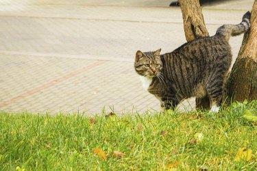 the street cat marks the tree