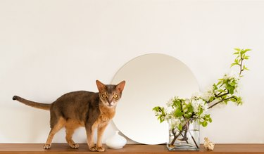 Cat white living room minimalist interior shelf mockup. Decoration living interior. Cozy interior round mirror flowers