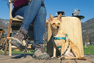 Dog sitting next to a woman with hiking shoes having a coffee break in the sun