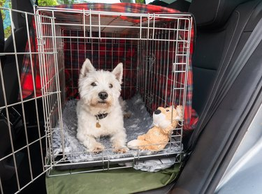 Cute dog waiting to set off for a car journey